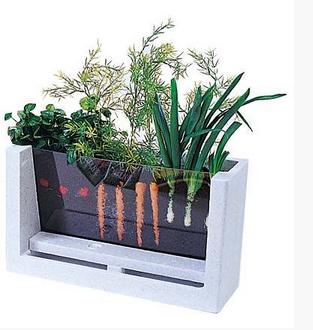 My First Garden: 5 Innovative Indoor Apartment Gardening