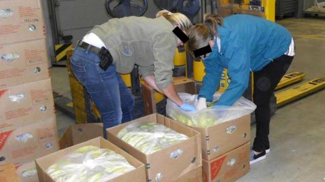 Found hundreds of kilos of cocaine under banana
