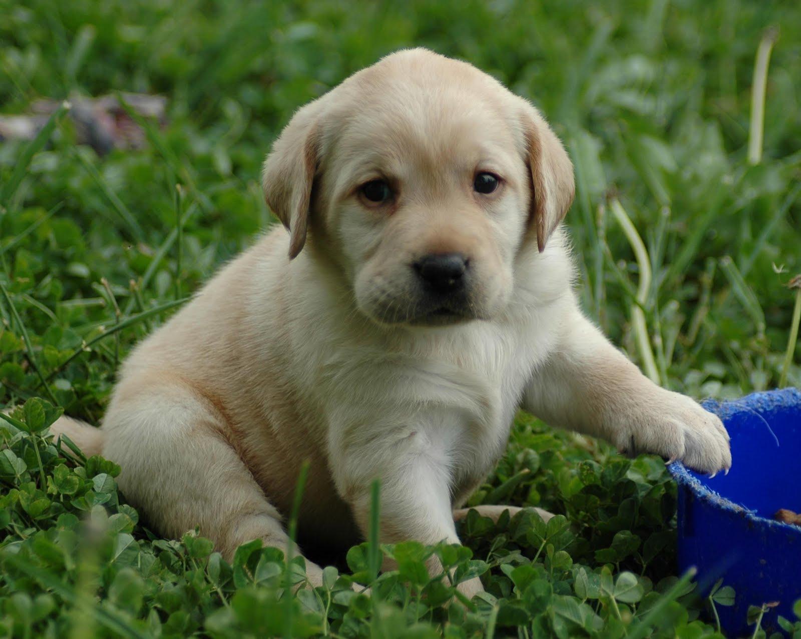 http://2.bp.blogspot.com/-yL-9S5DP3JU/TkYe4AYrRzI/AAAAAAAAC_M/dauv31t98Zw/s1600/puppy-HD-wallpaper.jpg
