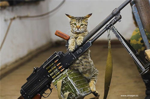 Funny Cats with Guns | Funny Collection - 33.5KB