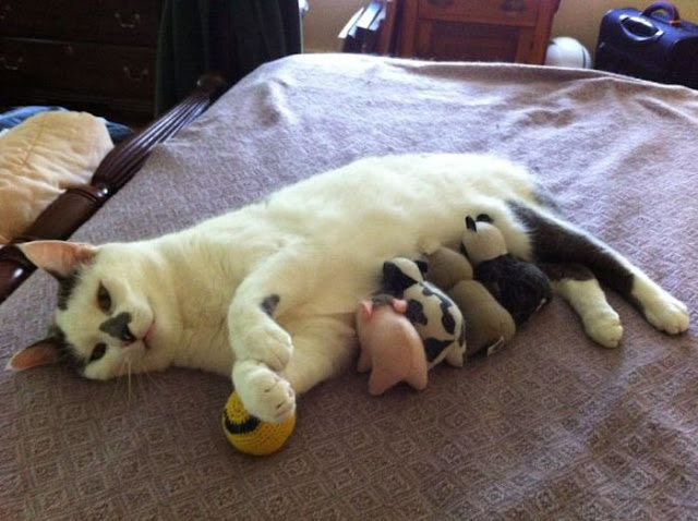Funny cats - part 54 (30 pics + 10 gifs), funny cat pictures, cat pictures, kitten pics, funny photos