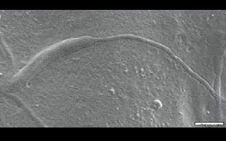 Cientistas do Museu Sueco de História Natural fizeram uma descoberta surpreendente durante pesquisas na Antártida.  O objetivo da equipe de estudiosos era analisar amostras de rochas do continente gelado, mas o que eles acabaram encontrando foi muito mais interessante.  Os pesquisadores descobriram um espermatozoide animal com idade estimada em mais de 50 milhões de anos, o mais antigo já encontrado no mundo. Acredita-se que ele seja pelo menos 10 milhões de anos mais velho que outro descoberto anteriormente. O espermatozoide estava fossilizado em um casulo semelhante aos de vermes e parasitas. A descoberta da equipe liderada pelo paelontólogo Benjamin Bomfleur foi divulgada na publicação Biology Letters.