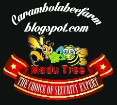 carambola bee farm