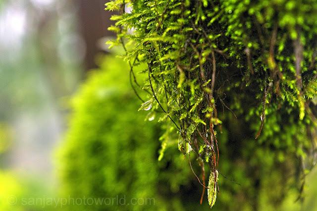 jungle tree dripping rain