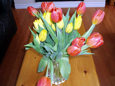 A close-up of my Tulips.