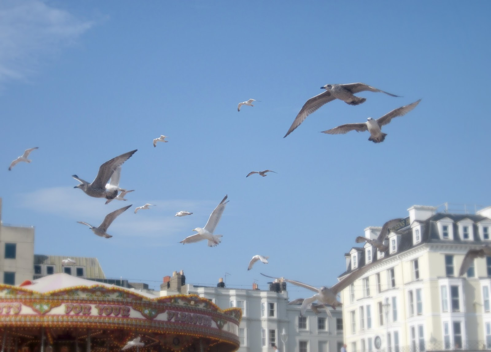 brighton beach seagulls and carousel