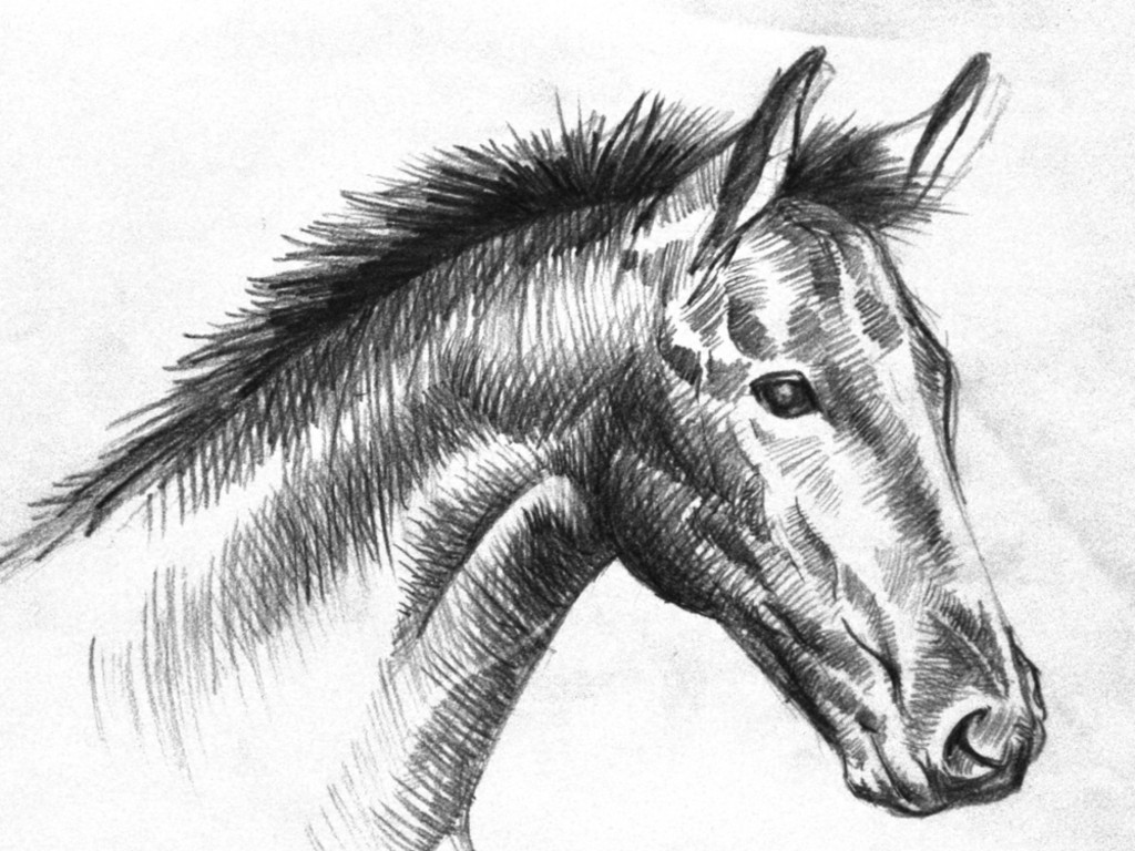 Black horse head drawing - photo#3
