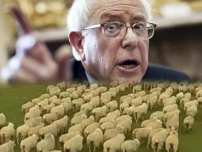 Bernie Sanders herding sheep