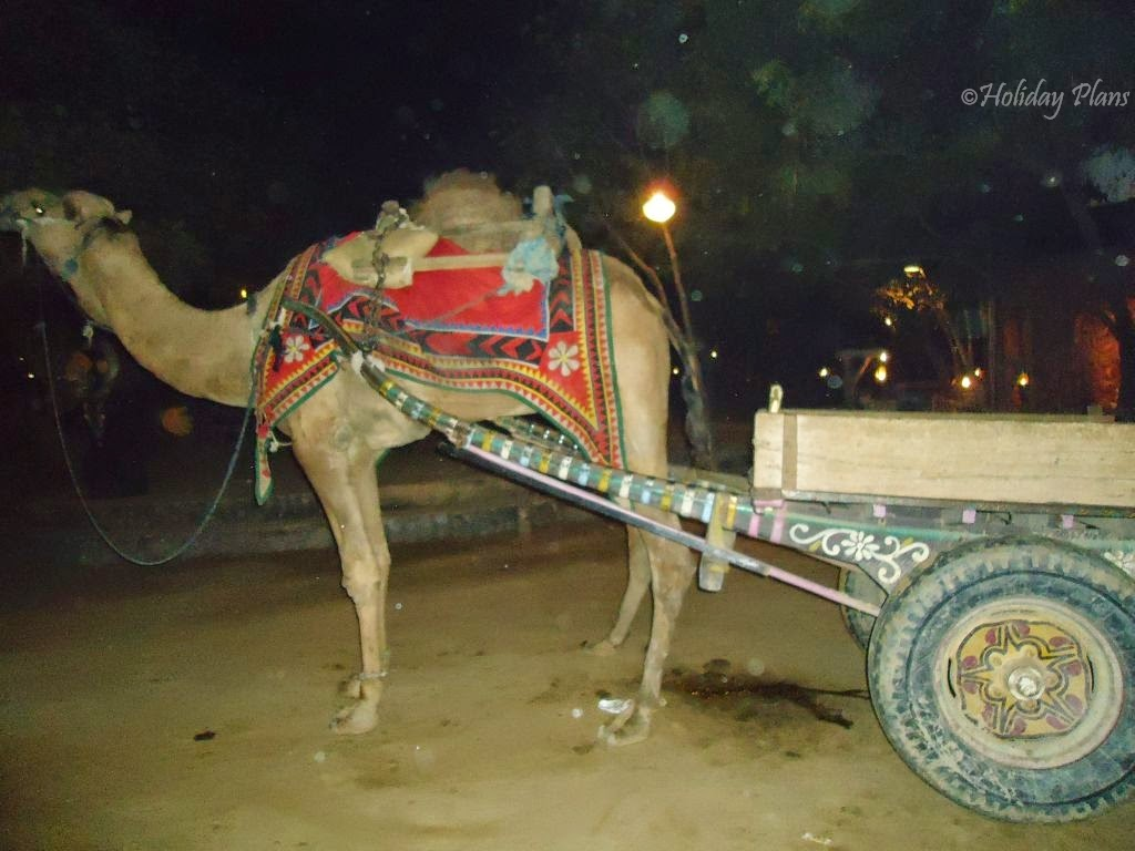 Camel and the cart