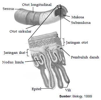 Organ Pada Hewan dan Fungsinya