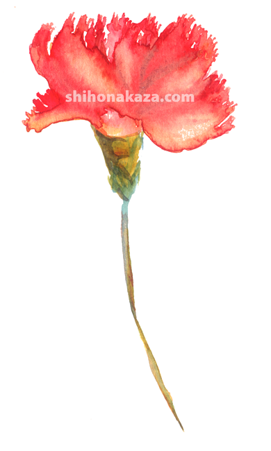 "Shiho Nakaza ""Los Angeles"" carnation flower sketch watercolor"