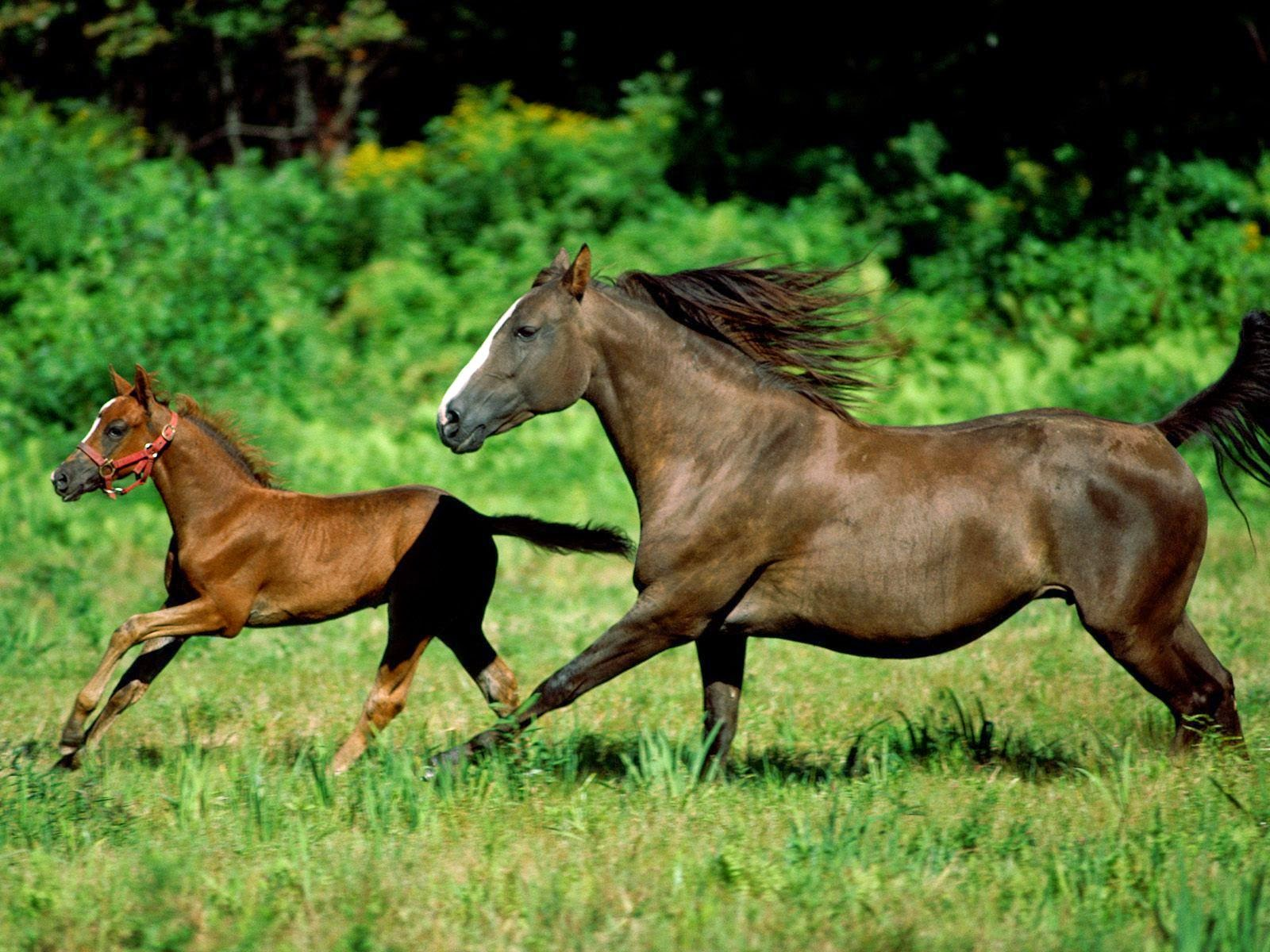 Animal Horse Couple HD wallpaper