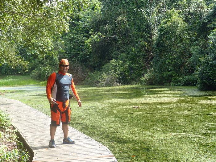 Chemperai Trail MacRitchie
