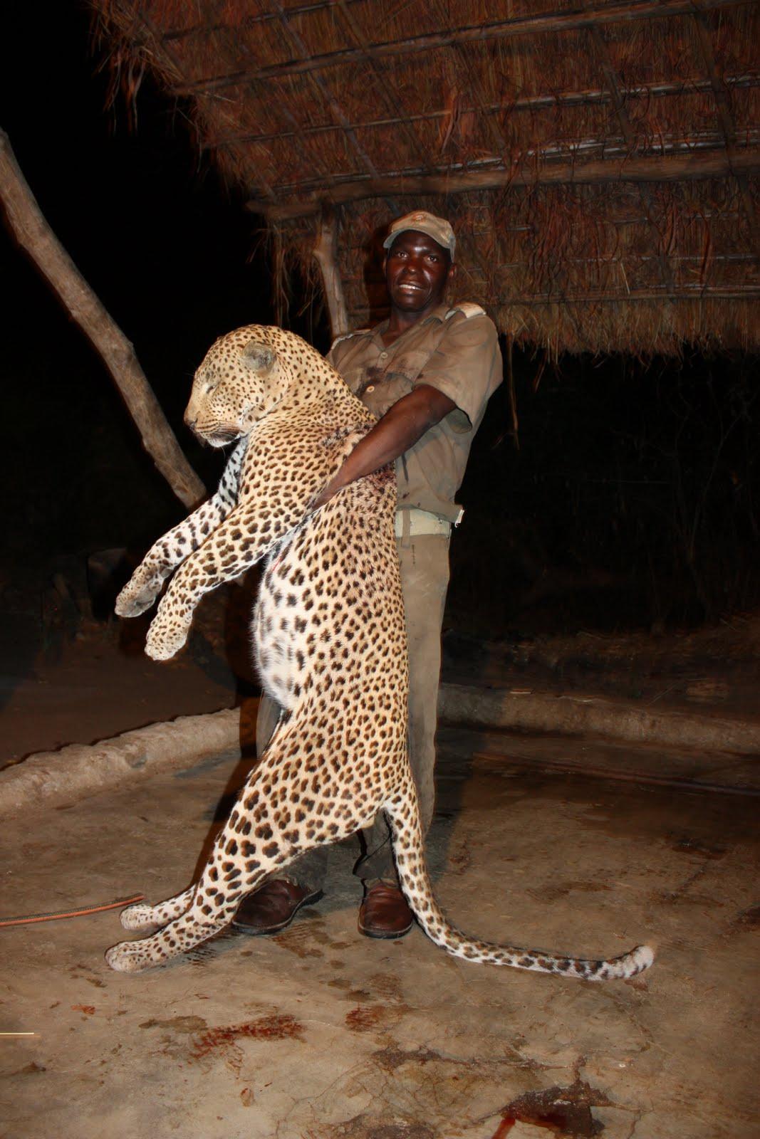 mutant leopards the messybeast - HD1067×1600