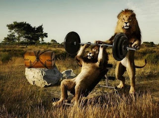 lion_lifting_weights_t2.jpg