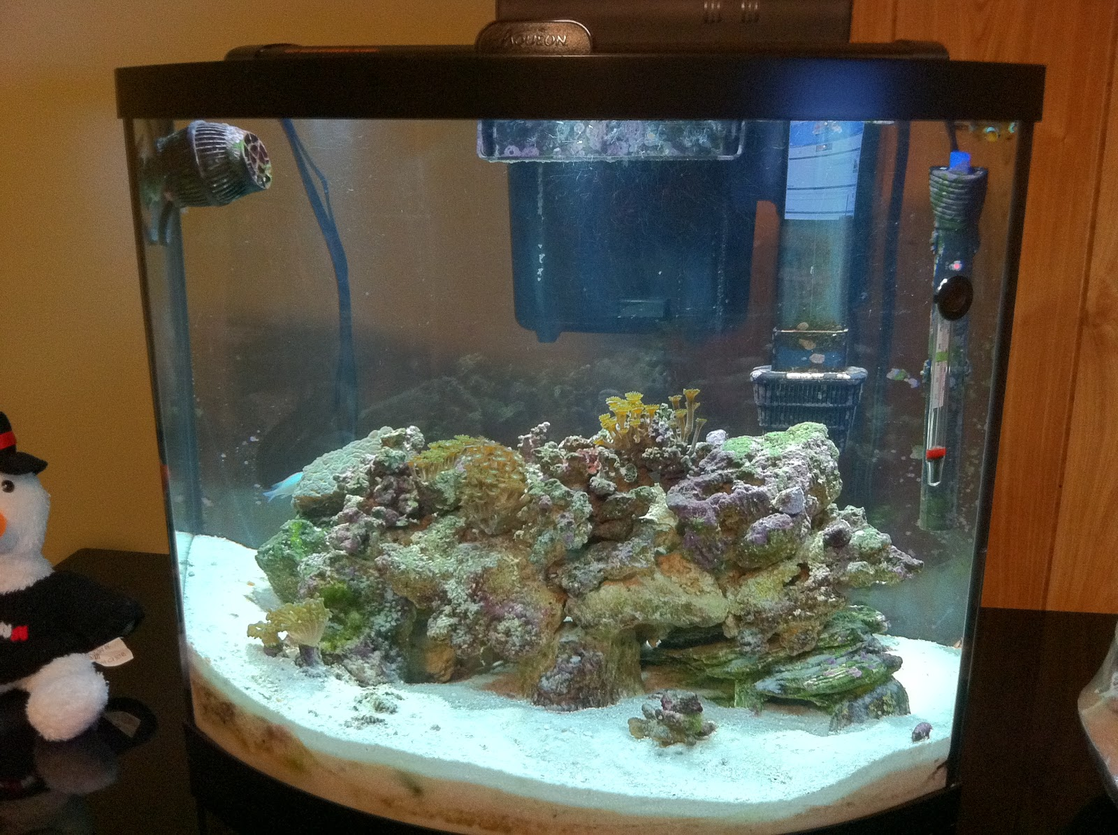 Saltwater tanks and other stuff by mathew bliss reef for 38 gallon fish tank