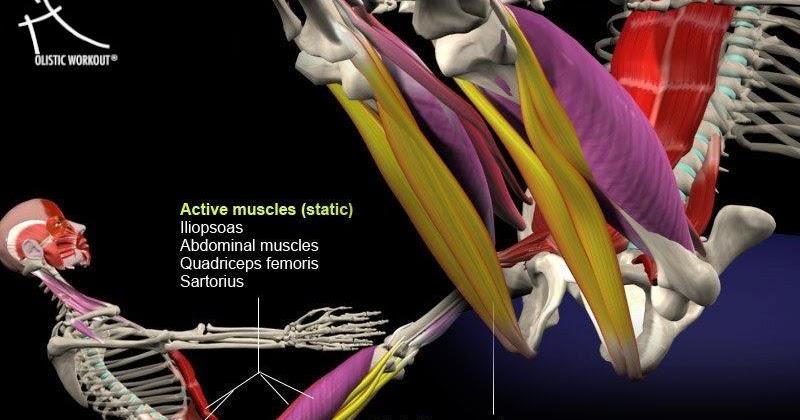 Colegio mexicano de ortopedia y traumatolog a musculos for W de porter ortopedia