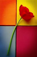 Bunga Terindah di Dunia