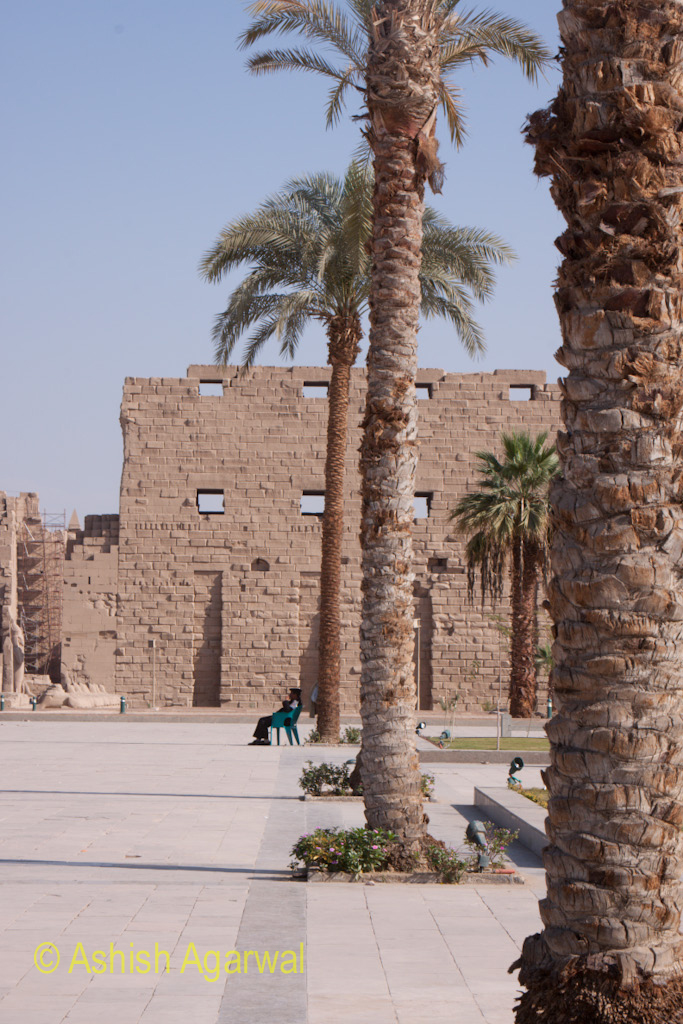 Palm Trees in a row in front of the Karnak temple in Luxor