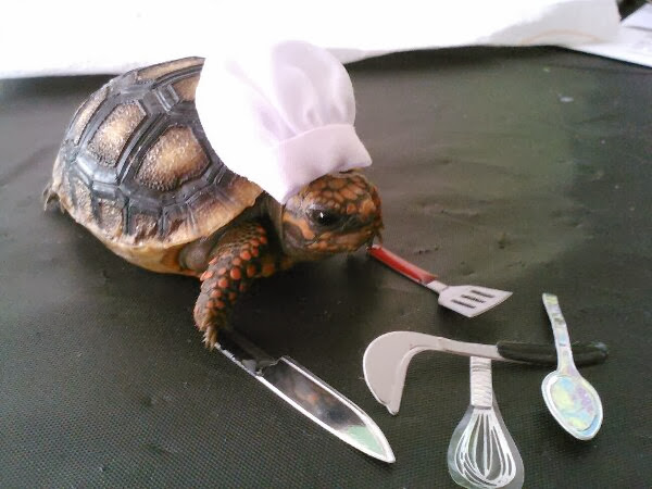 Funny animals of the week - 22 November 2013 (35 pics), tortoise with chef hat and cooking tools