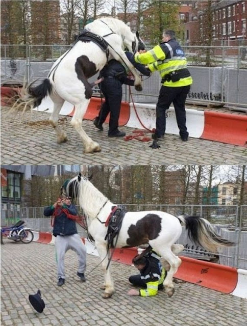 Até os cavalos!