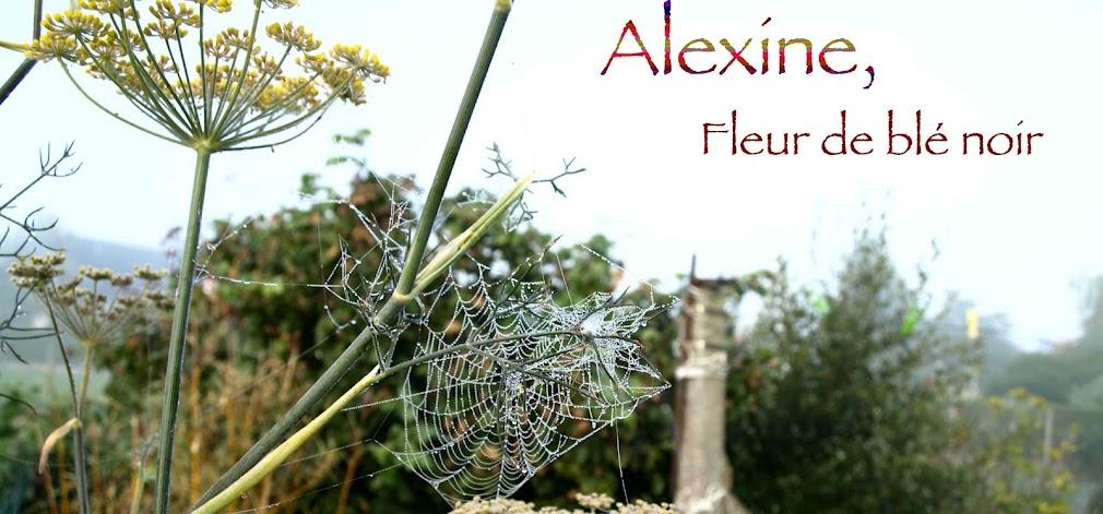Alexine, Fleur de blé noir...