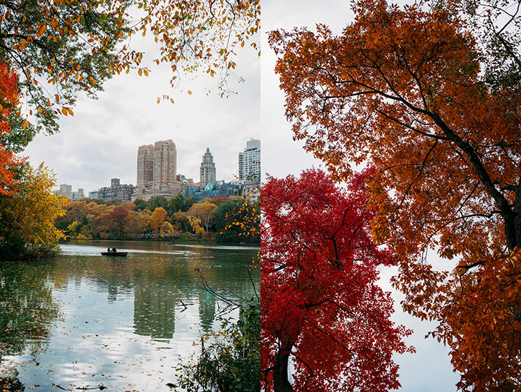 Fall Foliage New York NYC