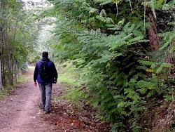 En el Bosque..