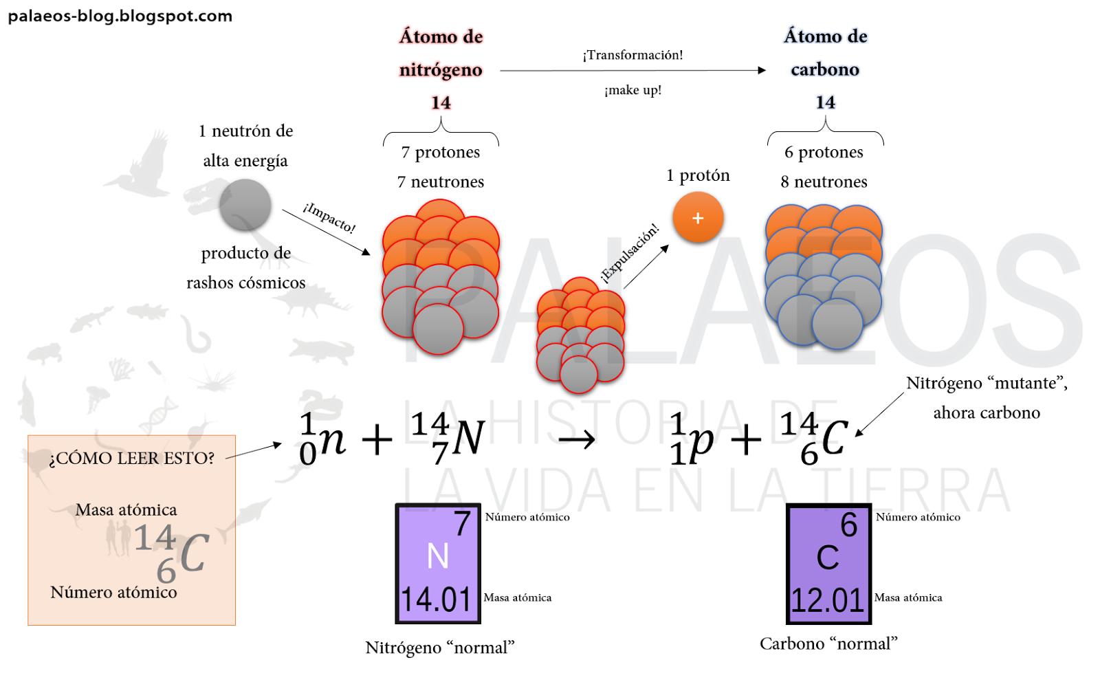 Palaeos, la historia de la Vida en la Tierra: Carbono 14 ¿cómo funciona?