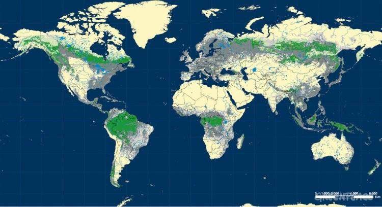 L u c i l n e a s bosques for Plano de un vivero forestal