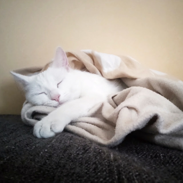 Gata blanca durmiendo