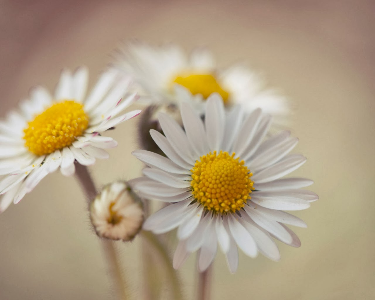gather flowers wallpapers - photo #6
