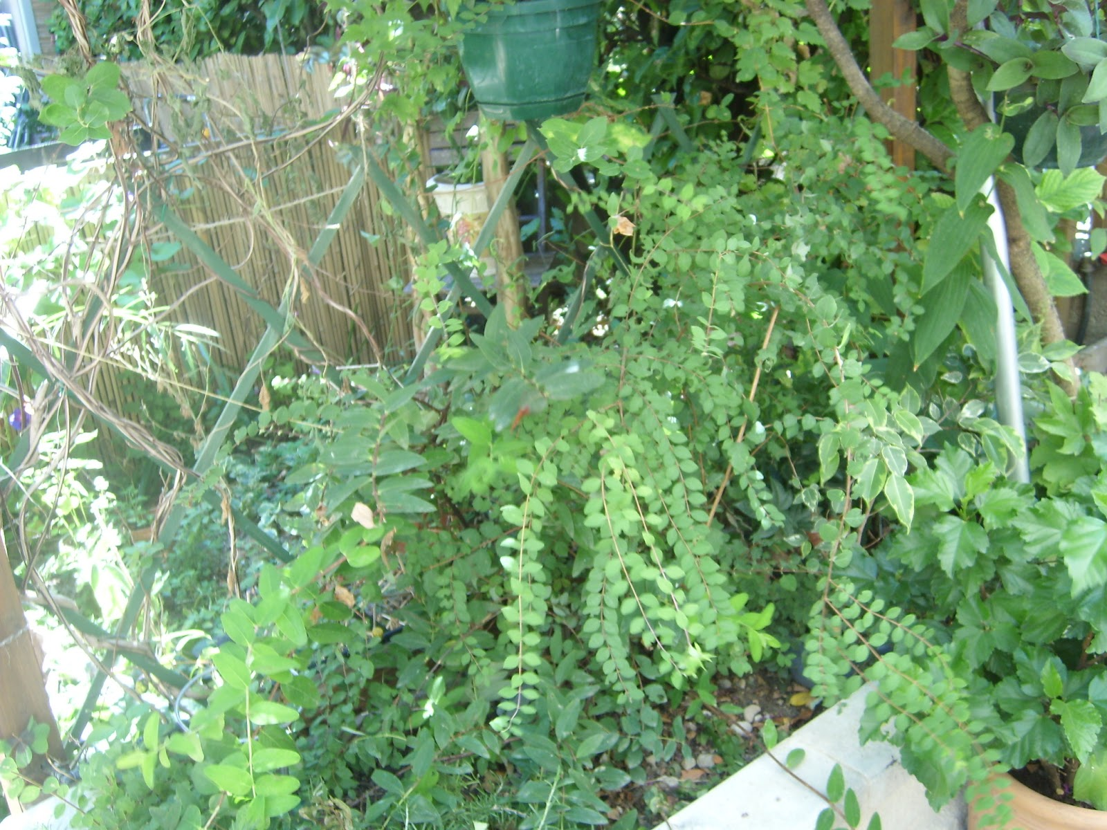 Le jardin de pascaline defi hortensia plantation for Jardin plantation