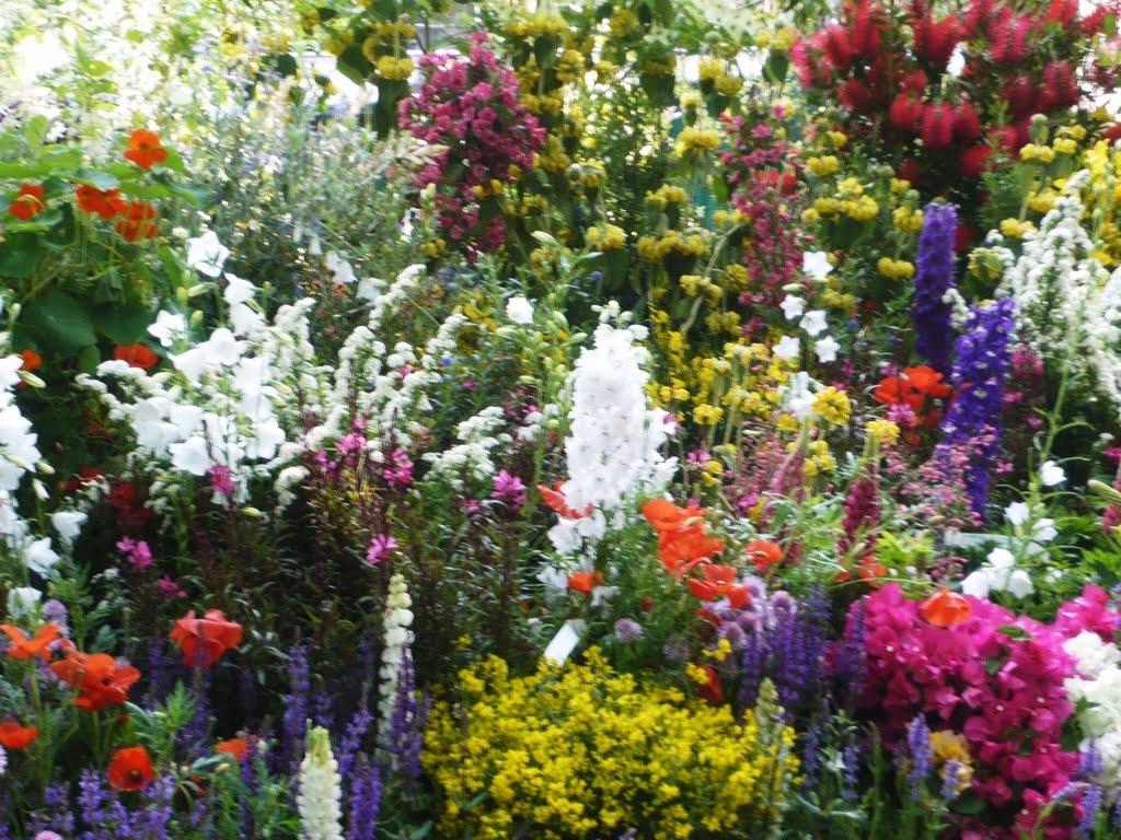 Orticola 2011 mostra mercato di piante rare blossom zine for Ingegnoli piante