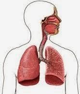 Obat Radang Paru Paru (Pneumonia)