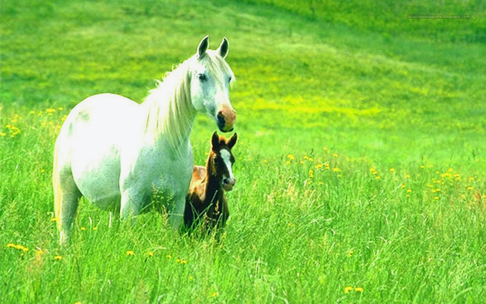 Most Beautiful Horse Pictures and Images
