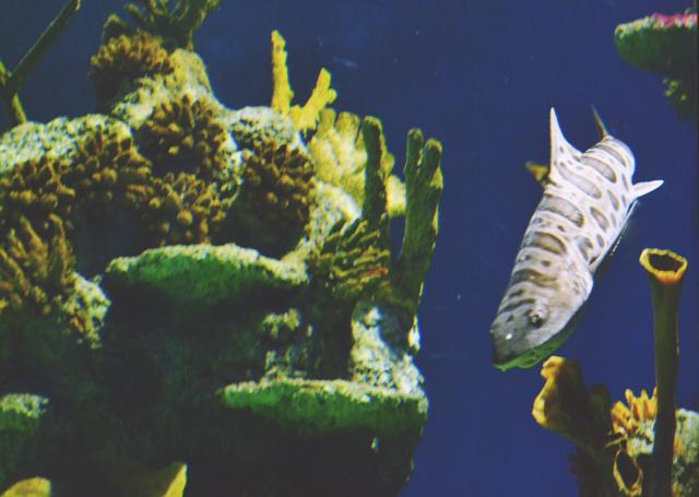 Bristol Aquarium shark