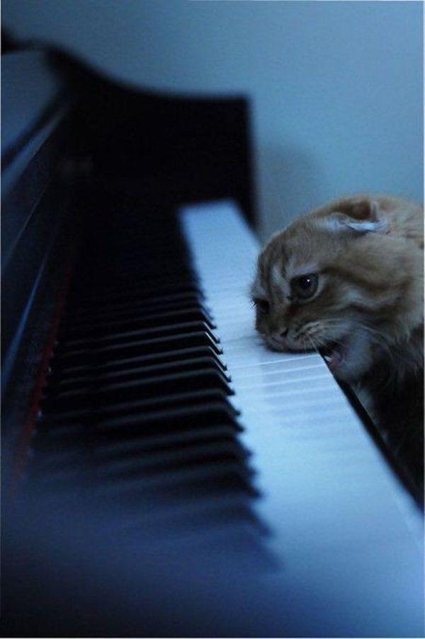 funny cat pics, cat photos, funny cats