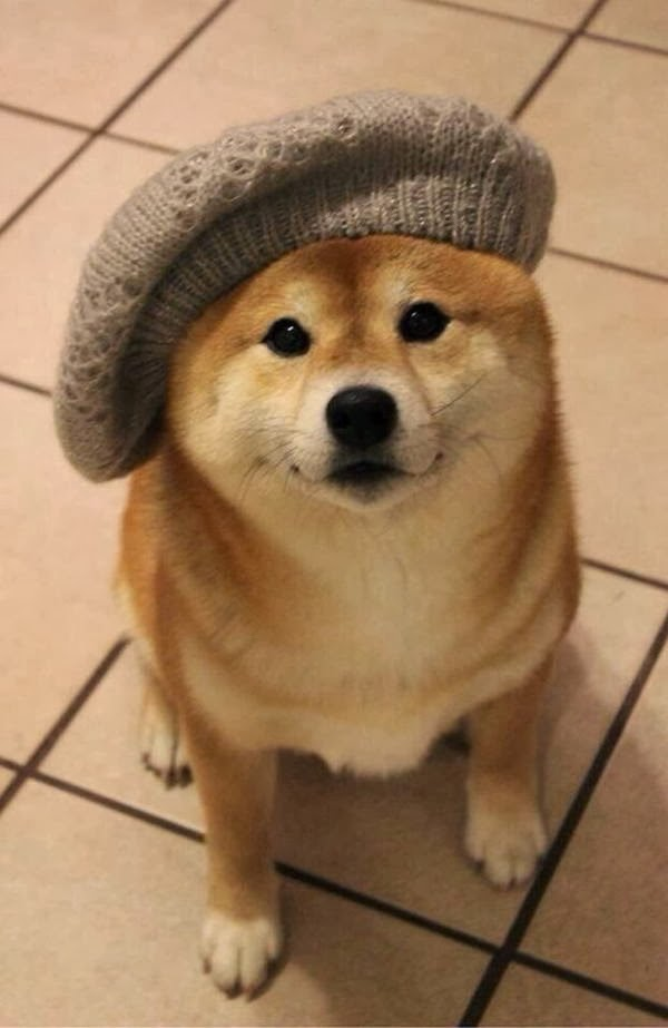 Cute dogs - part 7 (50 pics), shiba inu wears hat
