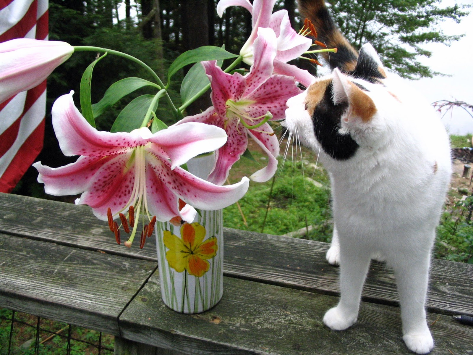 Alley cat rescue inc an alliance for cat protection flower dangers for felines - Toxic plants for dogs and cats the danger behind flowers ...