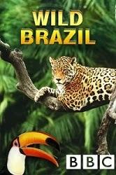 Thiên Nhiên Hoang Dã Brazil - BBC Wild Brazil