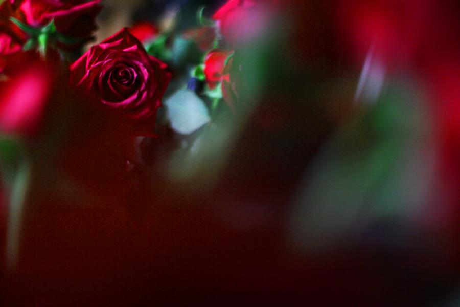 rosen fotografie tiefenschärfe