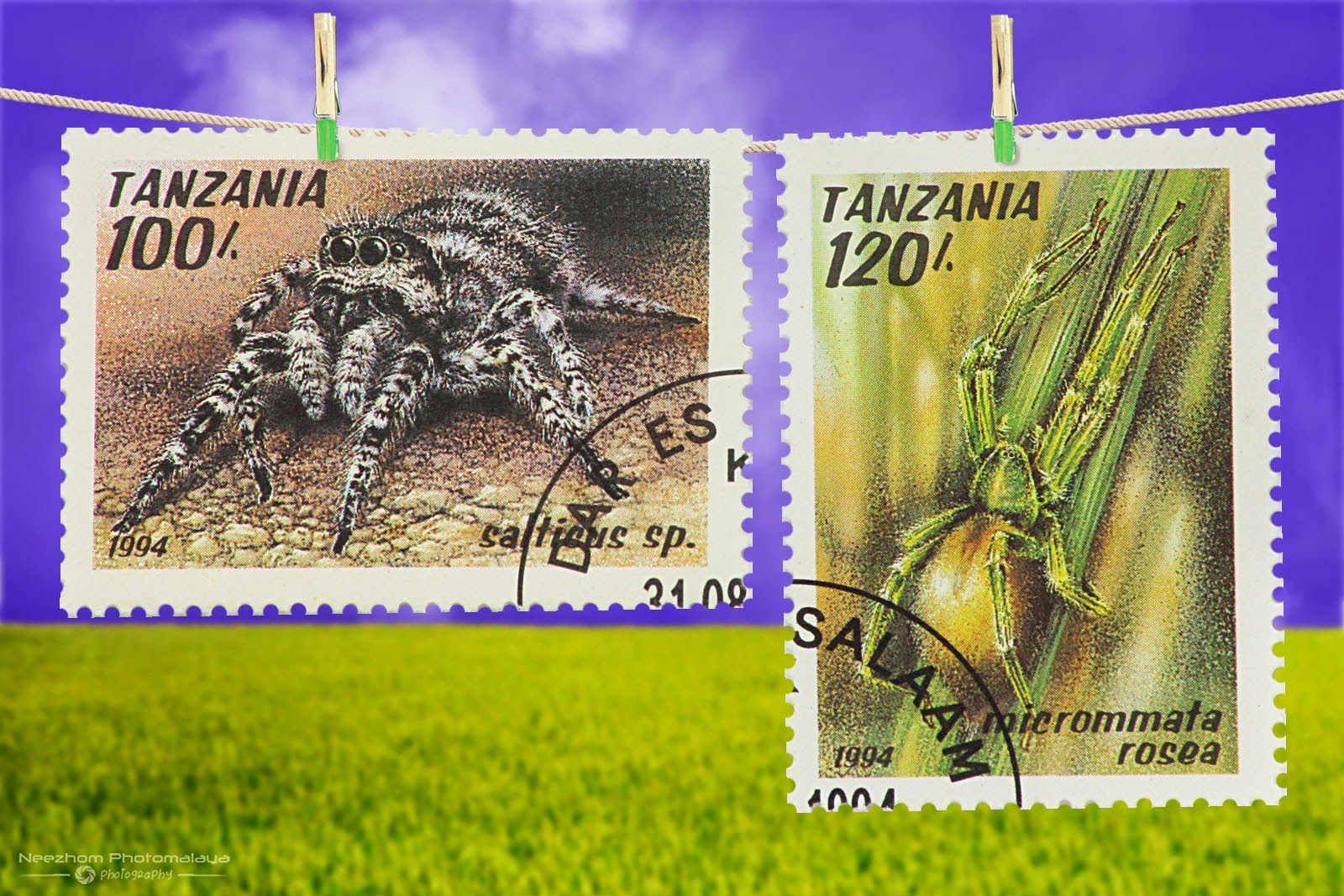 Tanzania Arachnids stamps 1994 - Salticus sp, Micrommata rosea