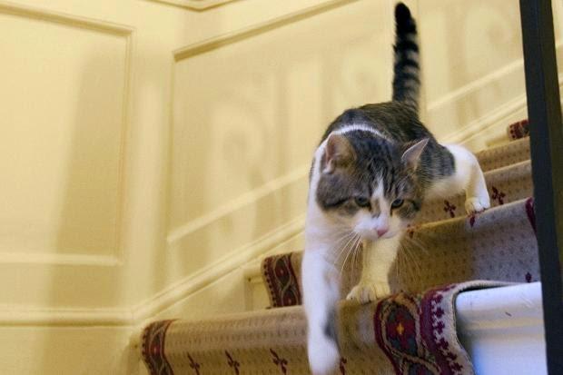 kucing naik tangga