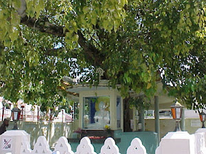 Bodhi Tree ( Gaya)