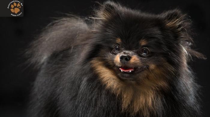 perros negros refugios