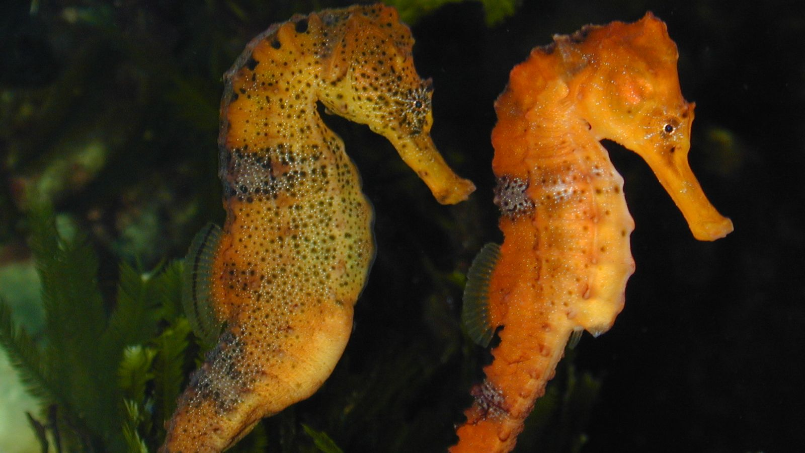 Real Monstrosities: Seahorseseahorse