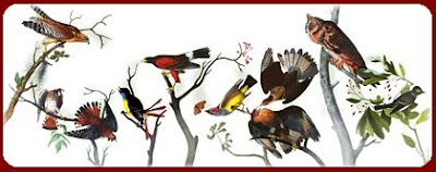 Google Celebrates 226th Birthday of John James Audubon