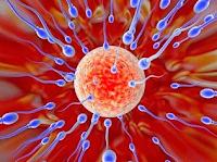 Obat Herbal Penyubur Sperma