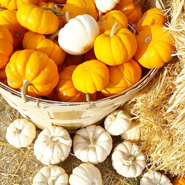 Tiny orange and white pumpkins
